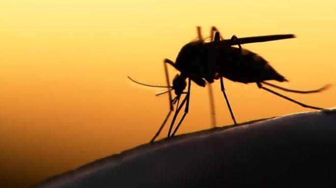 Paludisme Ghana Vaccin