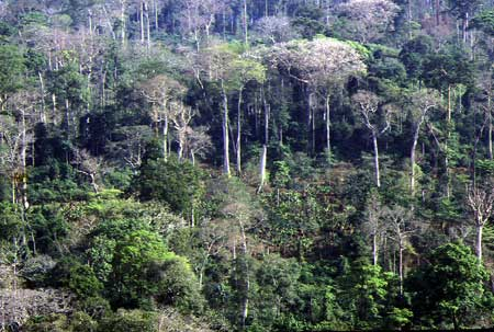 Forêt Côte d'Ivoire Aide Banque mondiale