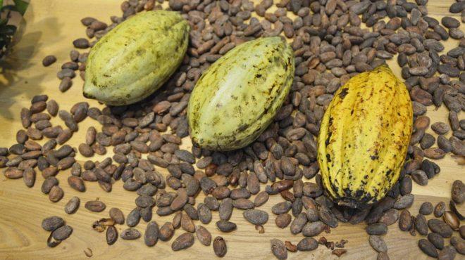 Cacao Côte d'Ivoire