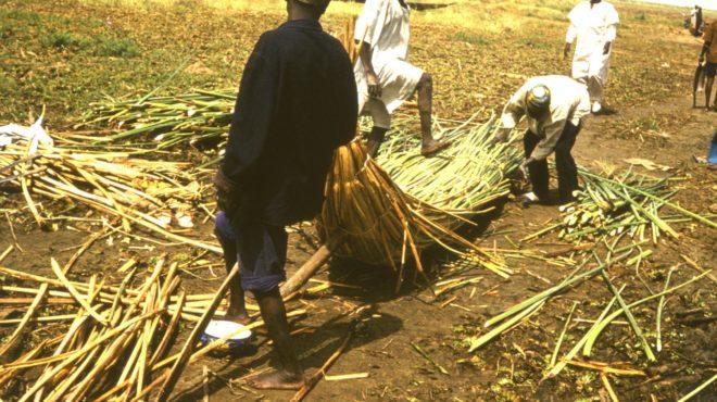 Nigeria agriculteurs