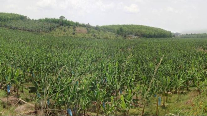 Bourses des matières premières agricoles