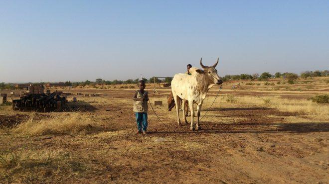 L'insécurité alimentaire menace le Burkina Faso