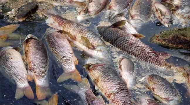 Usine de transformation de poissons à Freetown