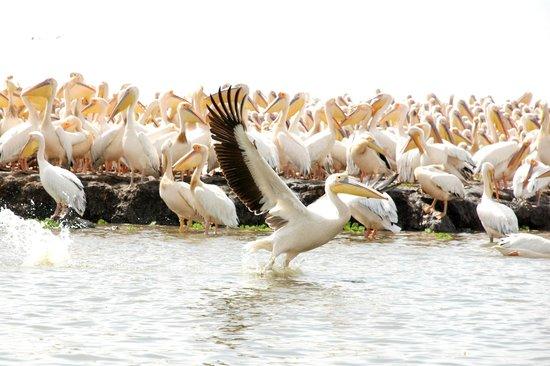épidémie de grippe aviaire