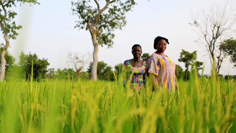 Coopératives agricoles